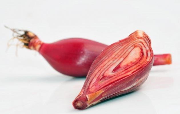 khasiat bawang dayak kalimantan