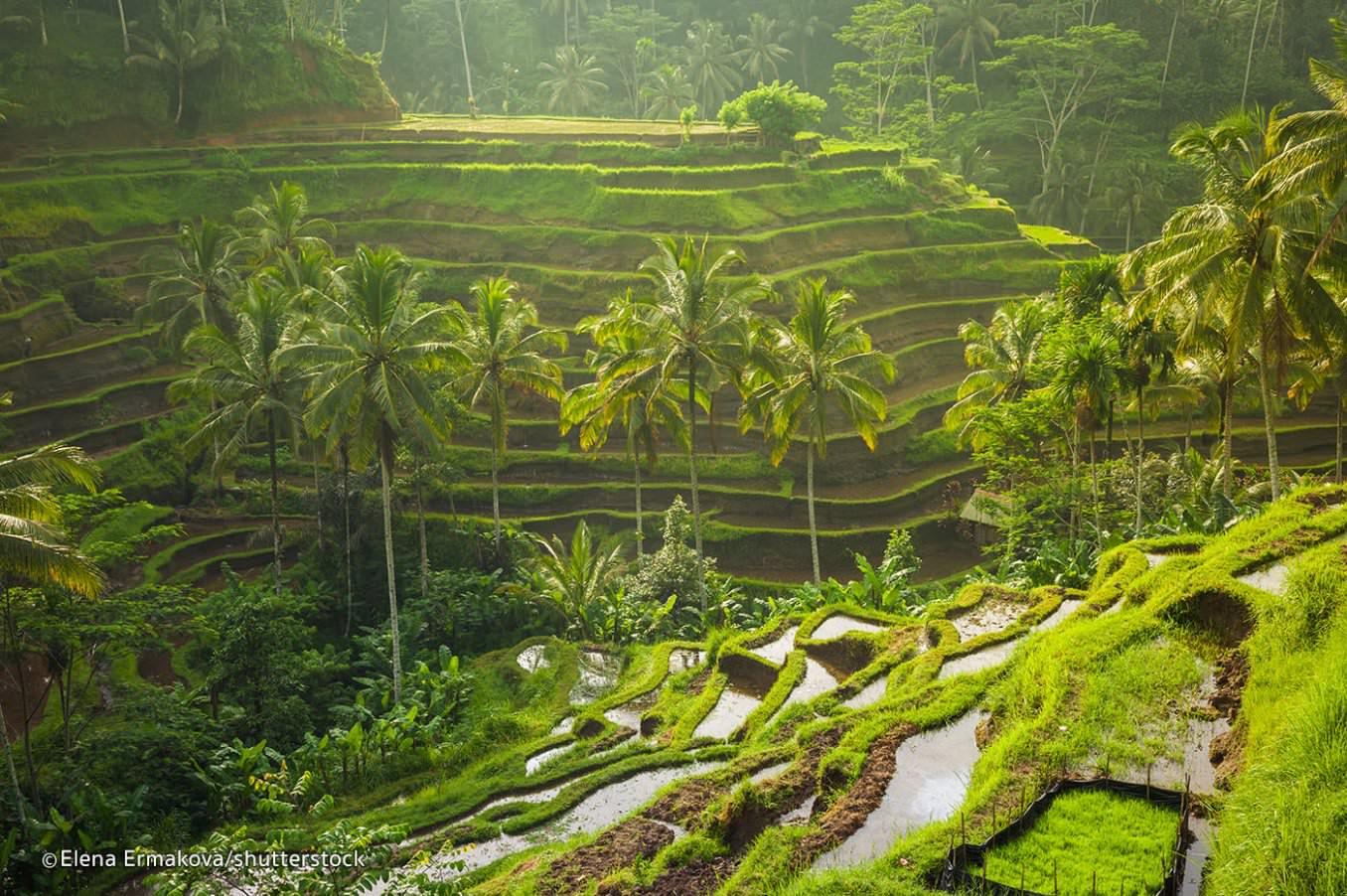 Hasil Pertanian Jawa