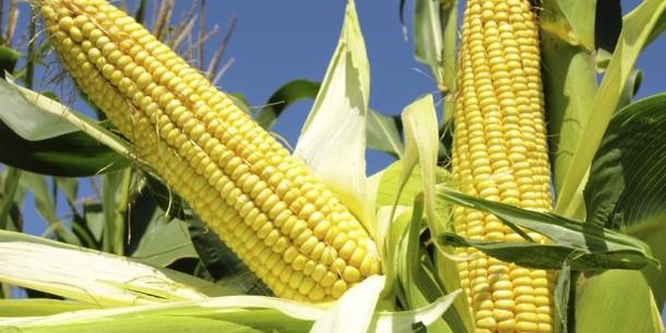 cara membuat bakwan jagung