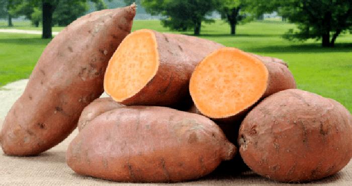Bisnis Makanan Olahan Ubi Jalar Yang Sangat Menguntungkan