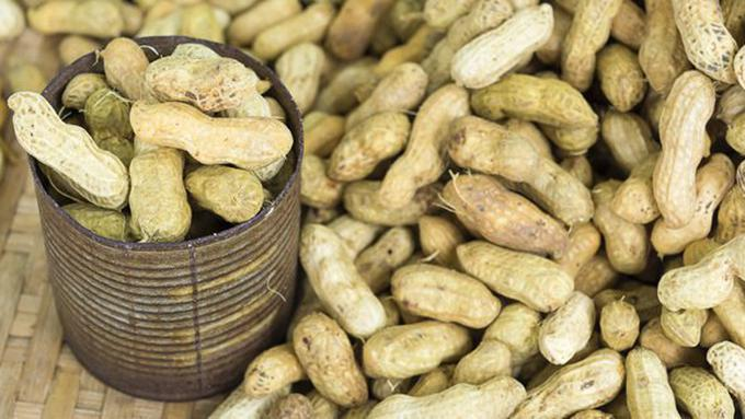 Cara Menanam Kacang Tanah di Sawah Agar Hasilnya Melimpah