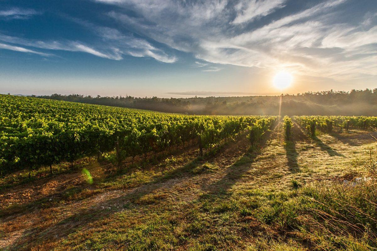 Usaha Pertanian Dan Peternakan Yang Sangat Menguntungkan