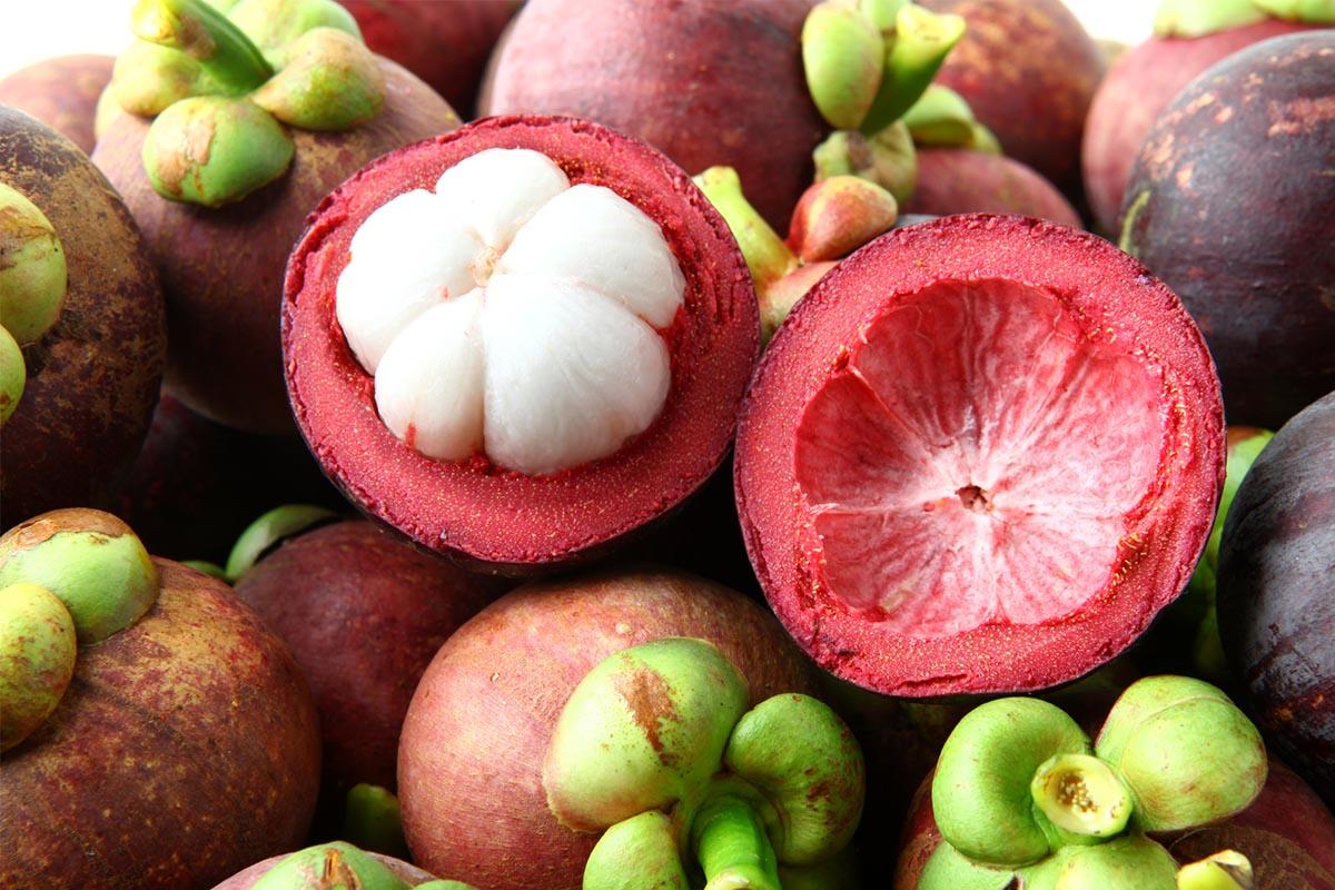Manfaat kulit Manggis dan Daun srsak