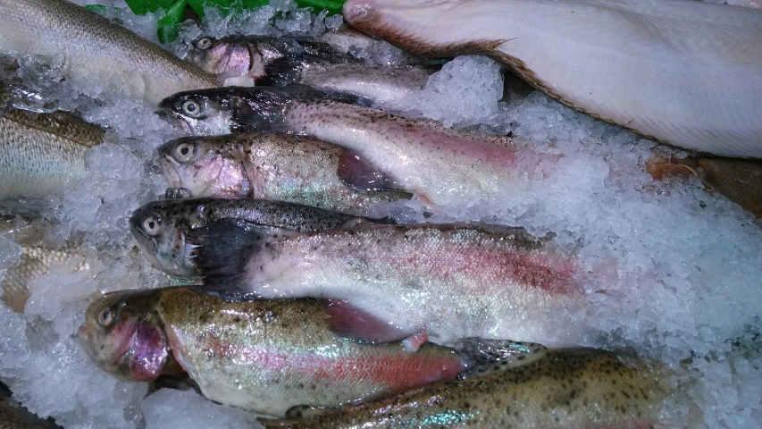 cara pengawetan ikan
