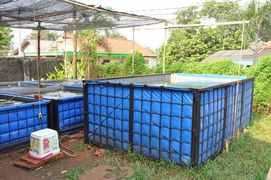 cara membuat kolam terpal di atas tanah