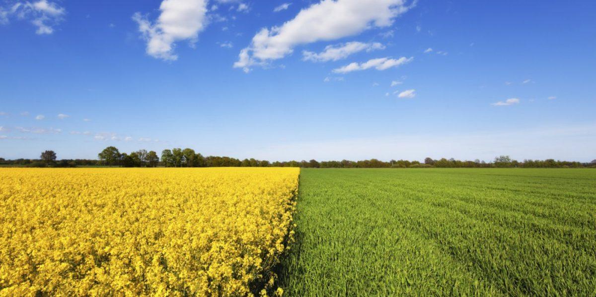 Jenis – Jenis Pertanian Berdasarkan Lahan Pertaniannya